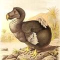 john-dodo